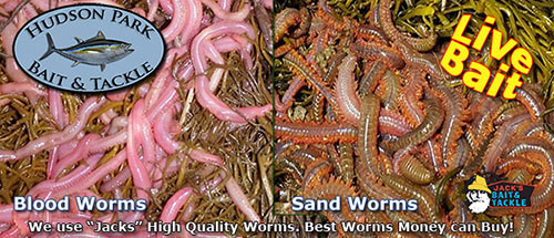 sand worm and blood worms